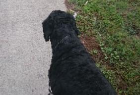 walking dog (2)